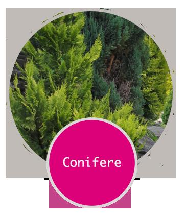Piantumazione conifere a Cortina